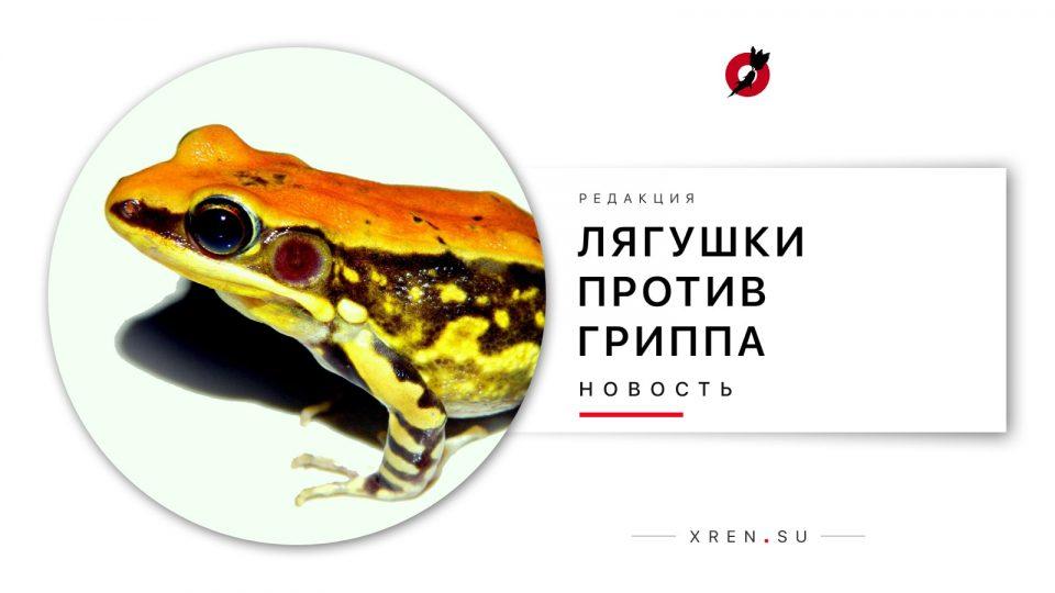 Лягушки против гриппа