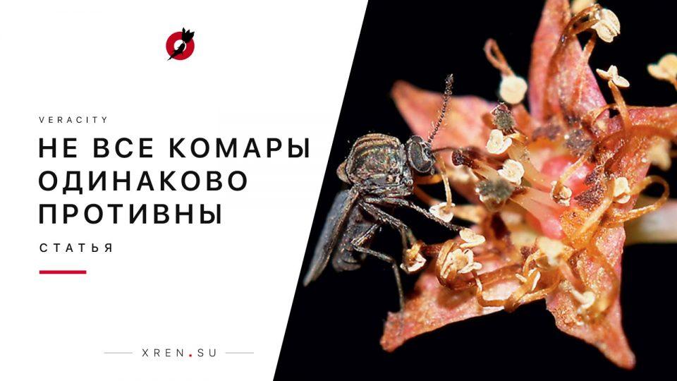 Не все комары одинаково противны