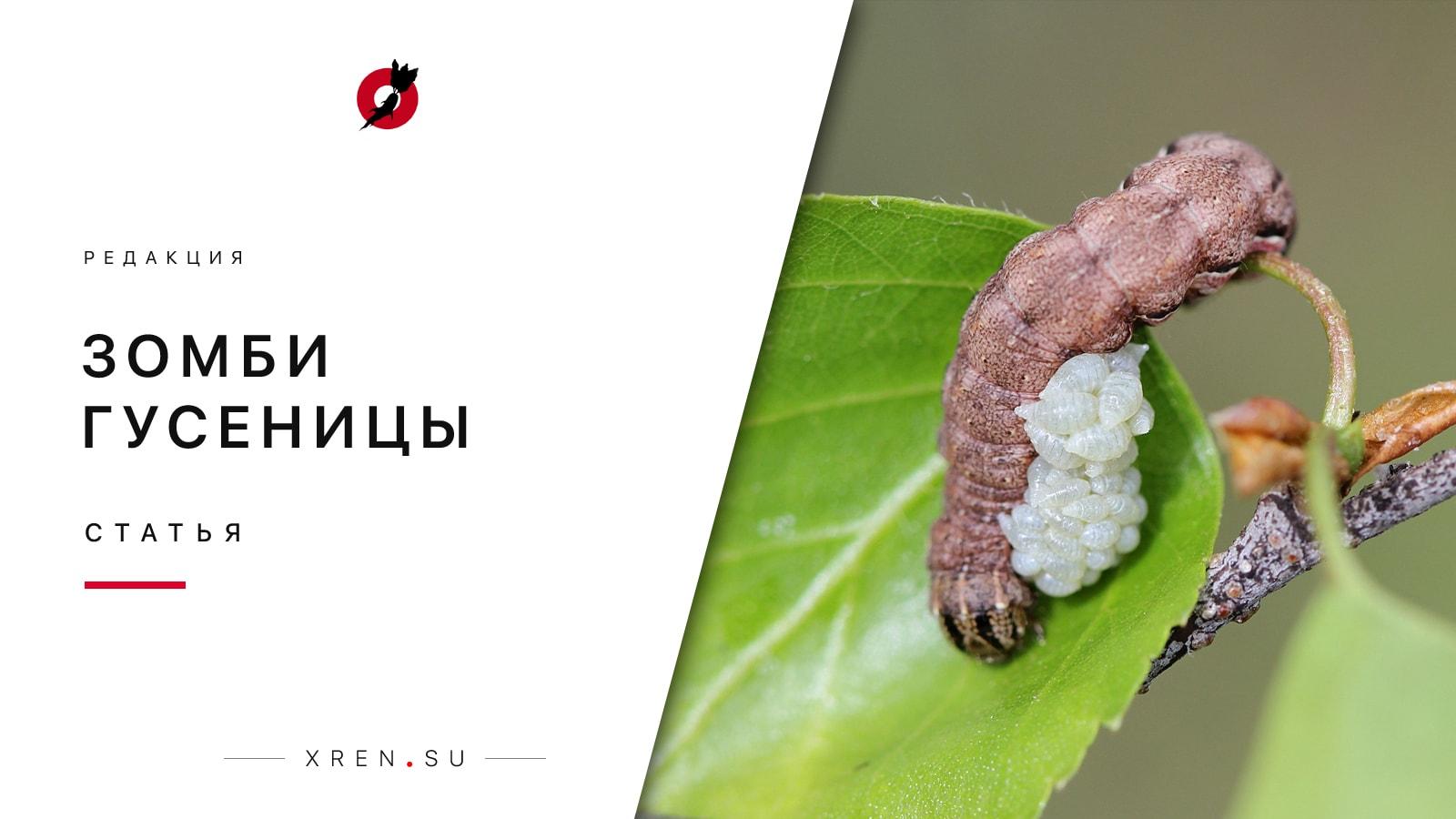 Зомби-гусеницы