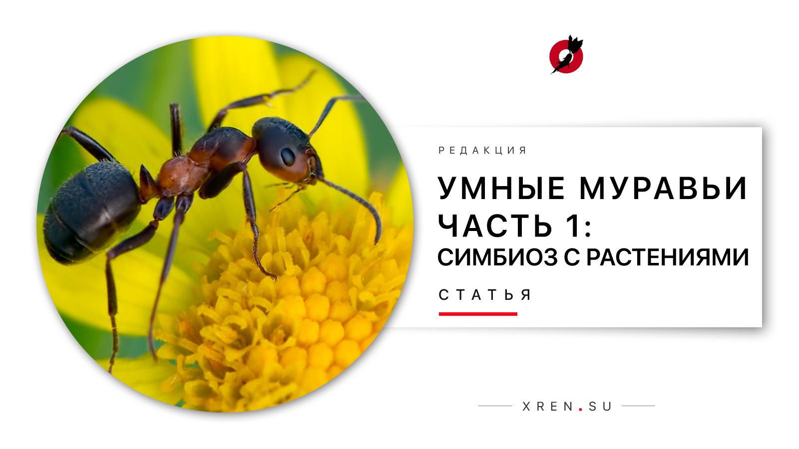 Умные муравьи. Часть 1: Симбиоз с растениями