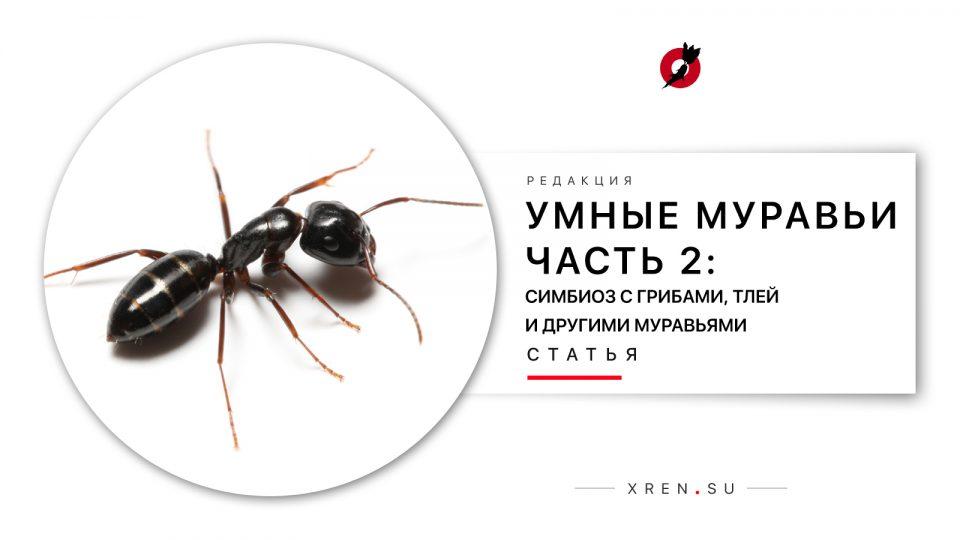 Умные муравьи. Часть 2: Симбиоз с грибами, тлей и другими муравьями