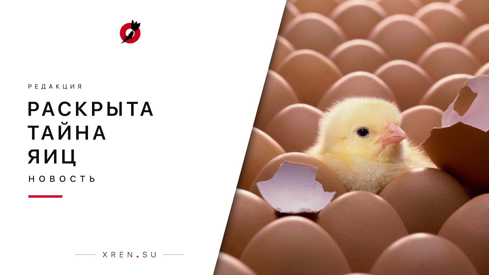 Раскрыта тайна яиц