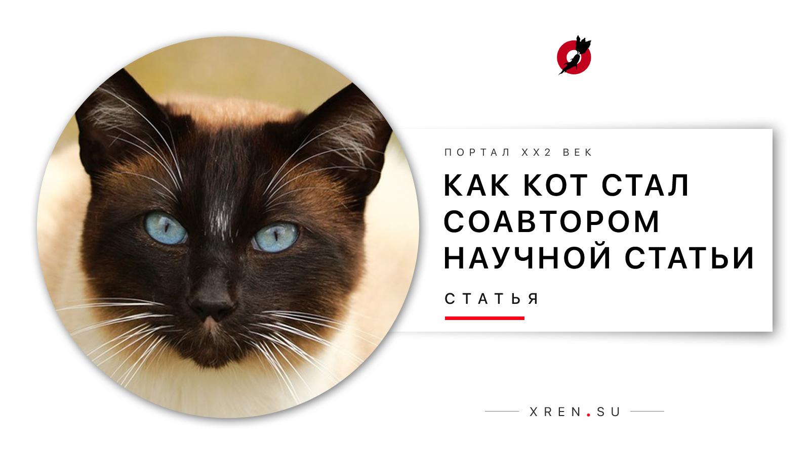 Как кот стал соавтором научной статьи