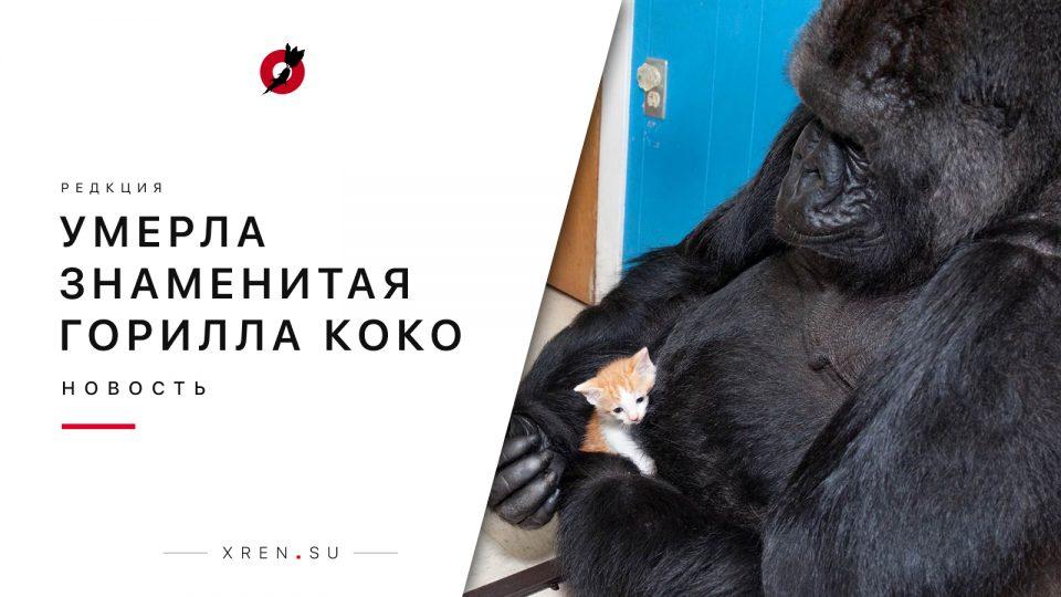 Умерла знаменитая горилла Коко