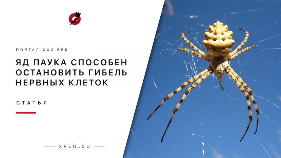 Яд паука способен остановить гибель нервных клеток