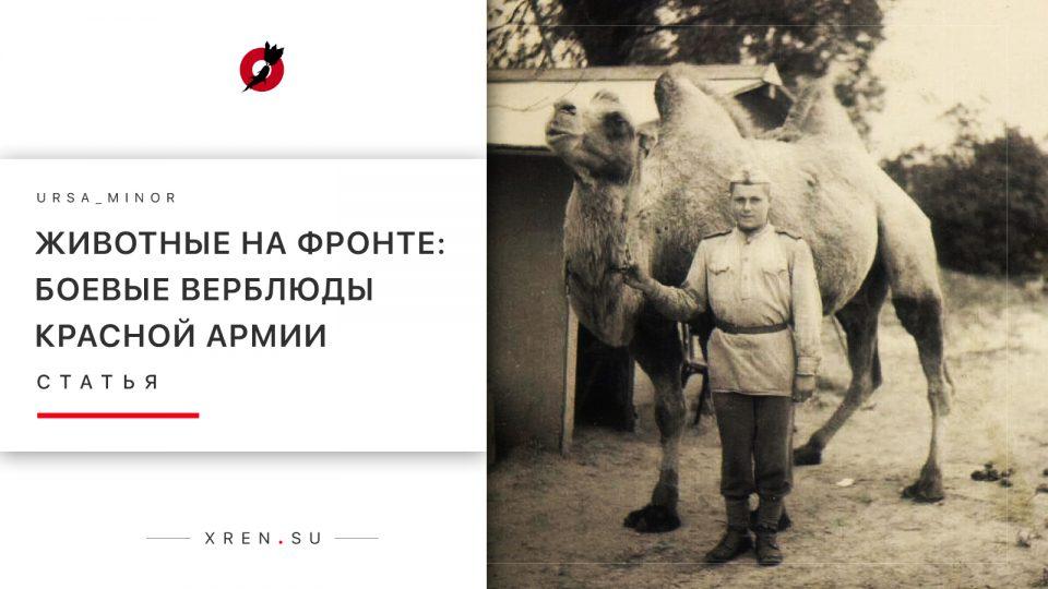 Животные на фронте: Боевые верблюды красной армии
