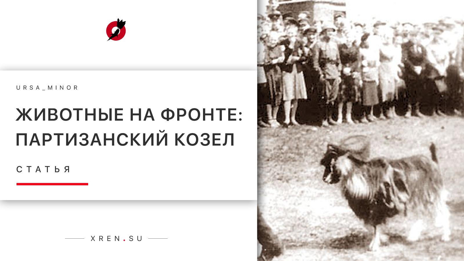 Животные на фронте: Партизанский козел