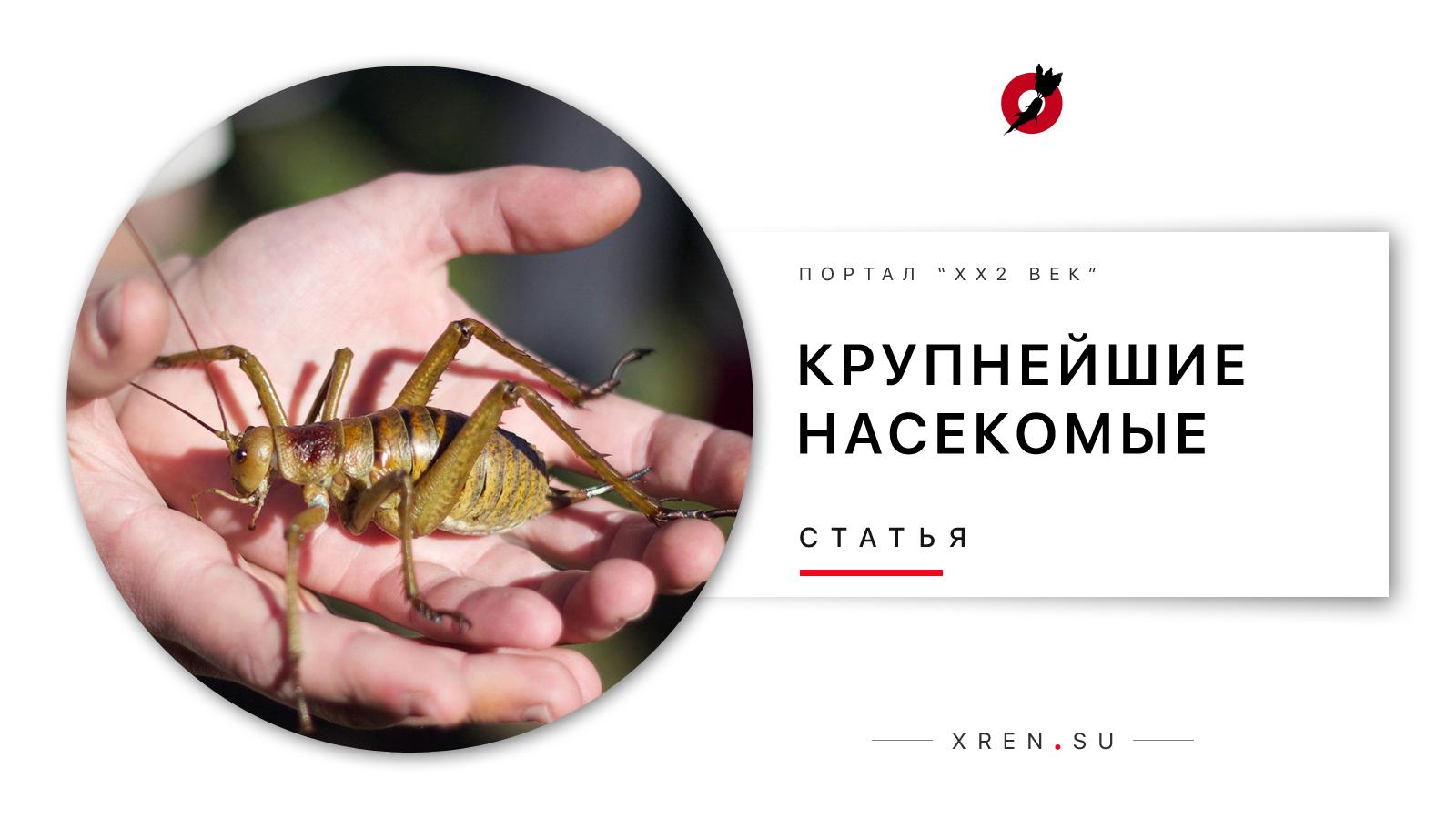 Крупнейшие насекомые, живые и мёртвые, реальные и сказочные